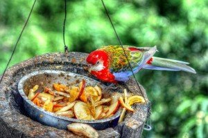 Bird, Feeding