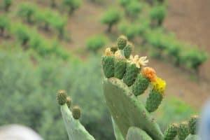 Prickly Fruit Plant Cactus Green