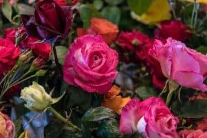 Rose Bouquet Flowers Color